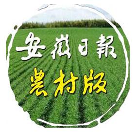 安徽日报农村版微信公众号