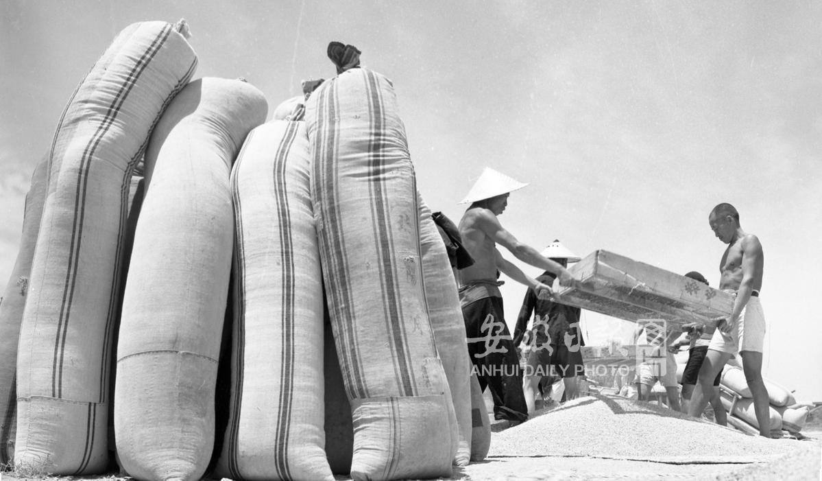 【历史·农业】淮北地区小麦丰收
