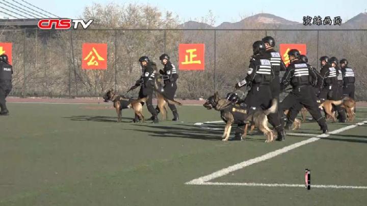 人犬协同作战演习在京举行